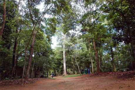 Jardim Botânico de Salvador